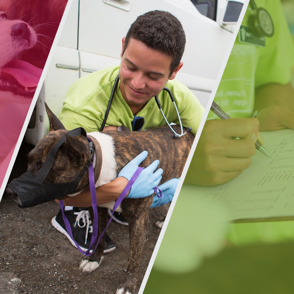 How to Become a Veterinarian: Your 8-Step Guide Square
