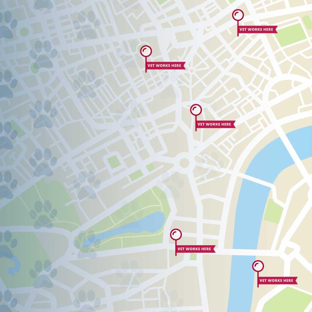 Where Do Veterinarians Work? 9 Surprising Locations Square