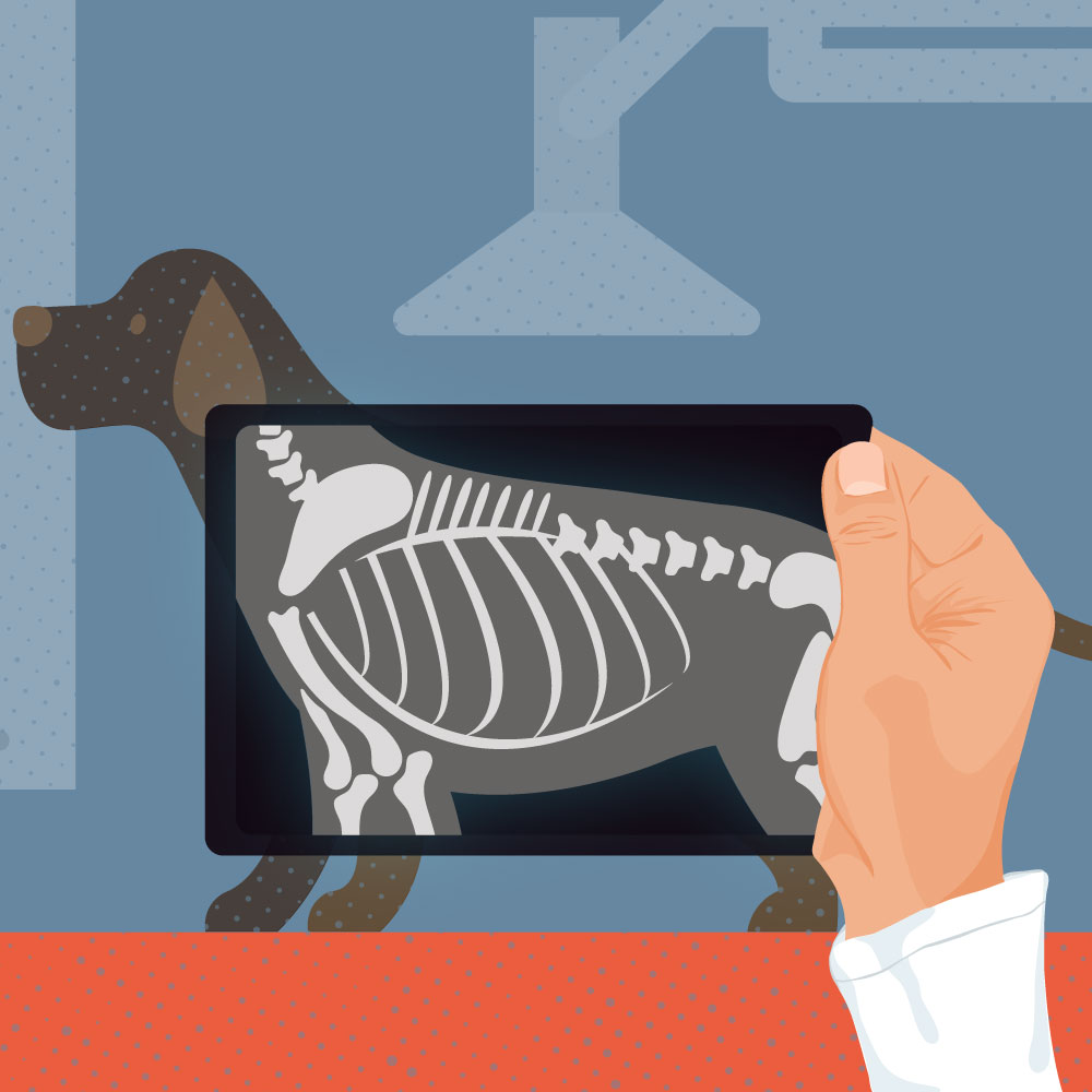 What Does a Small-Animal Vet Do? Exploring a Pet Doctor's Role Square