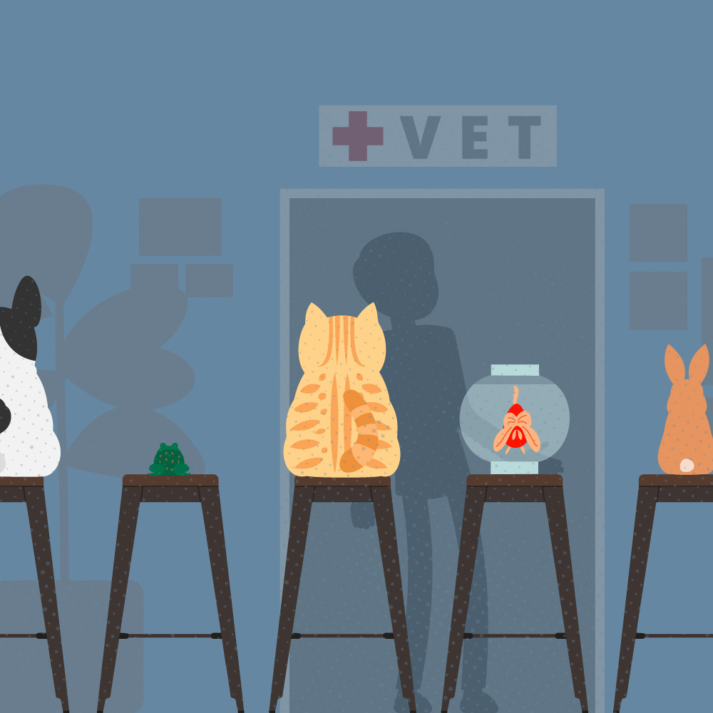 DVMs Share 8 Benefits of Being a Veterinarian Square