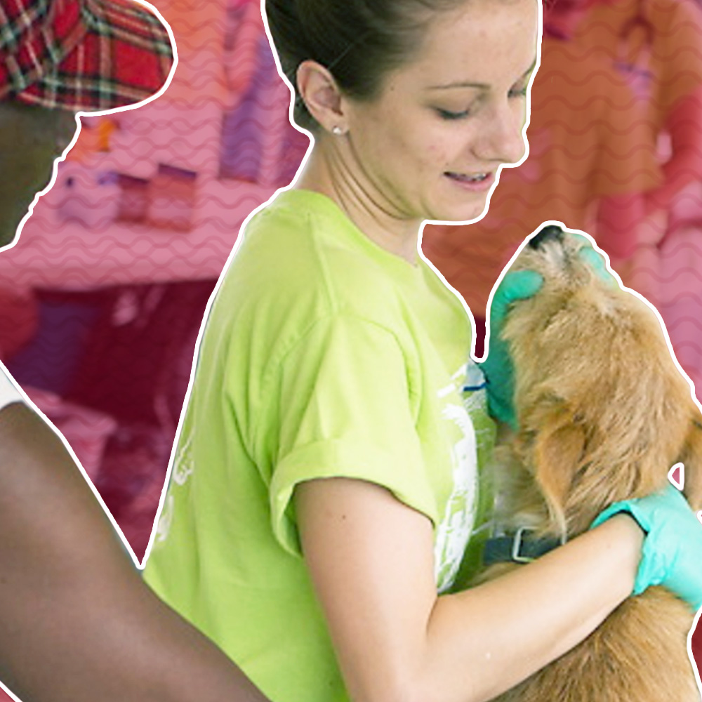 7 Signs You Should Consider a Career in Veterinary Medicine Square