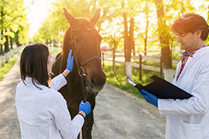 Two Veterinarians Working With a Horse