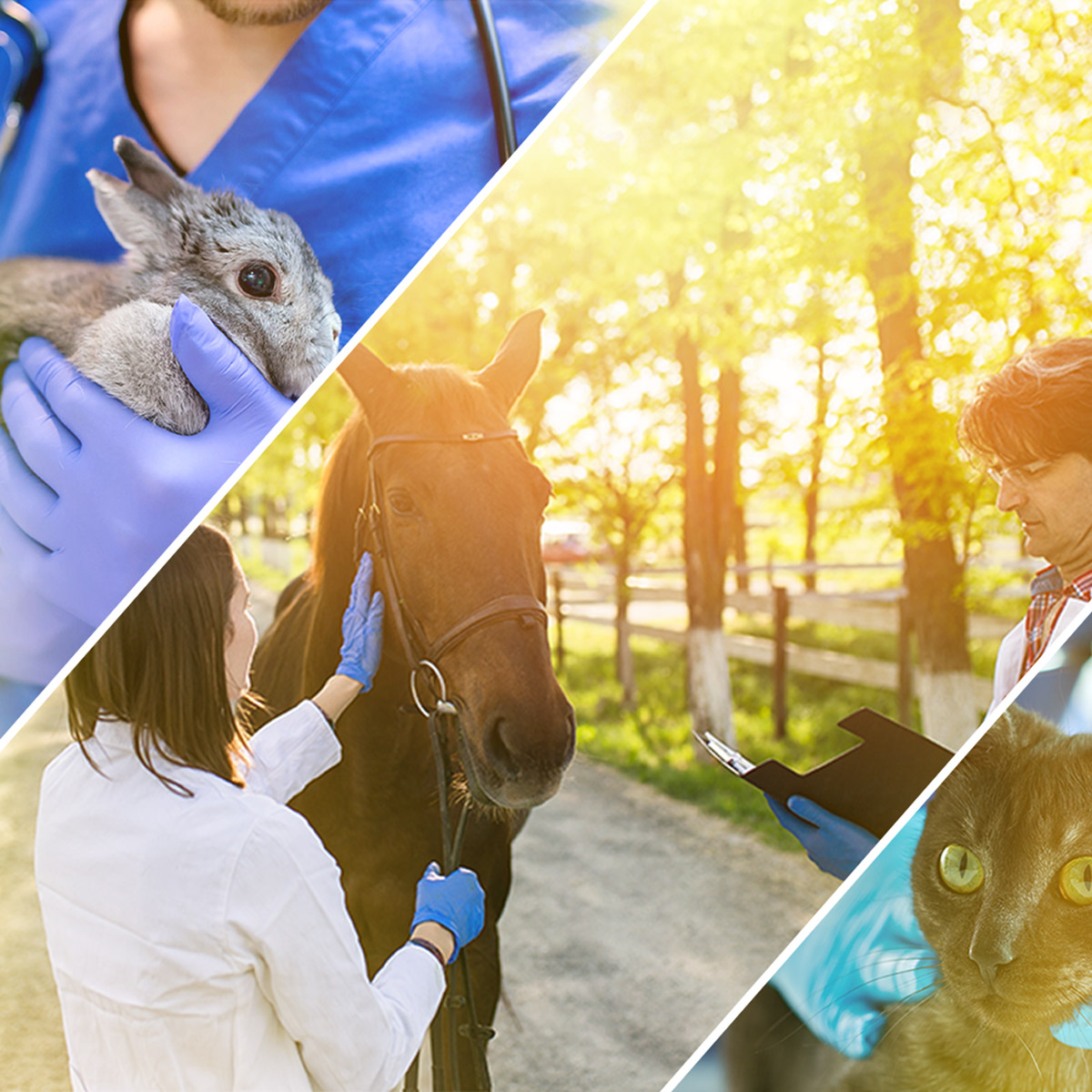 The Ultimate List of Veterinary Specialists Who Care for Animals Square