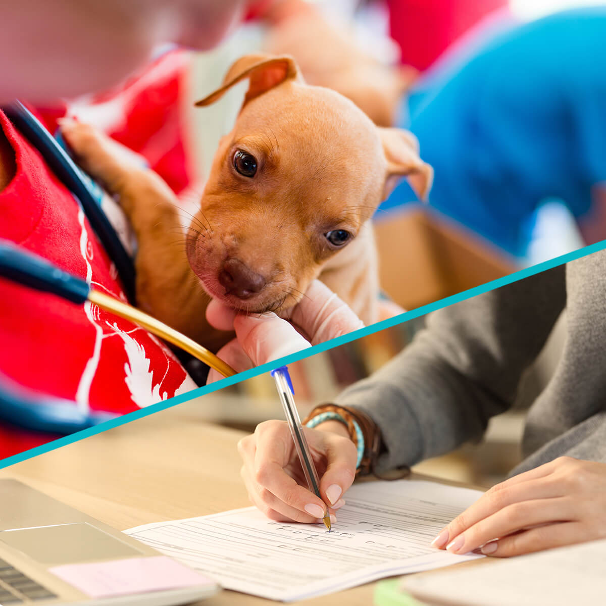 Banner image showcases both the process of application and a vet working with an animal.